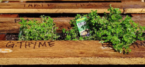 How To Make A Pallet Garden - Step By Step Guide
