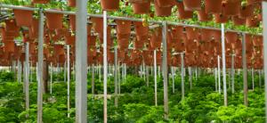 How Many Plants Can I Grow?