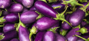 How To Grow Hydroponic Eggplant