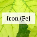 Iron (Fe) Nutrient Deficiencies In Plants