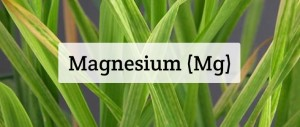 Magnesium For Plants: Deficiency, Toxicity, Sources, & More