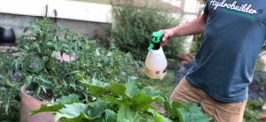 The Complete Guide To Organic Garden Pest Control