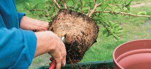 Root Bound Plant Prevention, Symptoms, and Treatment