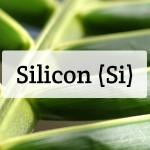 Silicon (Si) Nutrient Deficiencies