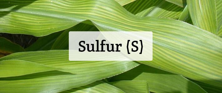 Sulfur (S) Nutrient Deficiencies