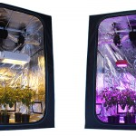 The Best Grow Light For Your Grow Tent