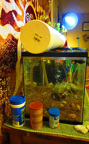 What Is An Aquaponics System?