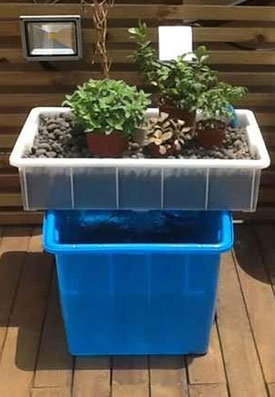 What Can You Grow In An Aquaponics System?