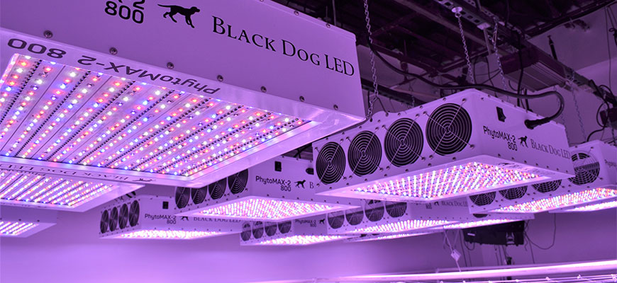 Best Led Grow Lights 2021 High Times Best LED Grow Lights Of 2020   Hydrobuilder Learning Center