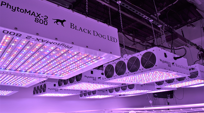 ultraviolet light for plants