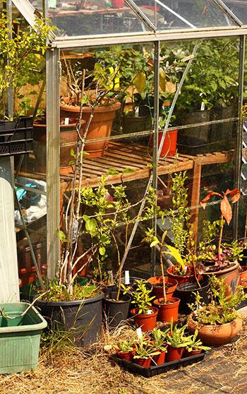 what to grow in winter vegetable garden