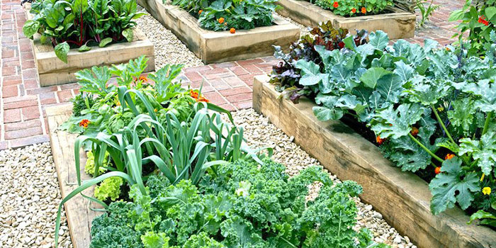 Garden Companion Planting Tips & Strategies
