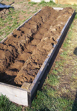 How To Plant a Raised Garden Bed: DIY Guide