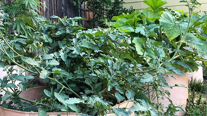 Treating Heat Stress In Outdoor Plants