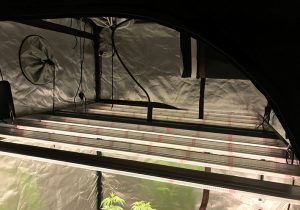 Gavita Pro LED commercial grow light top view in a grow tent