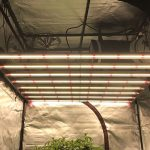 Gavita Pro 1650e LED Grow Light Review - Hydrobuilder