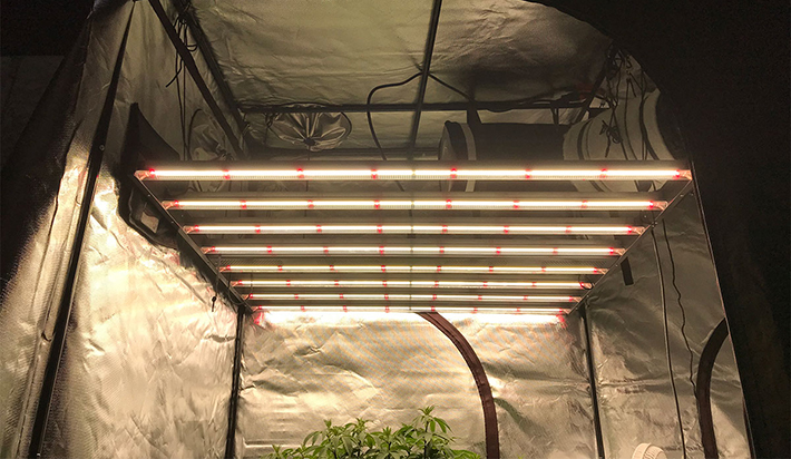 Gavita Pro 1650e LED Grow Light Review - Hydrobuilder