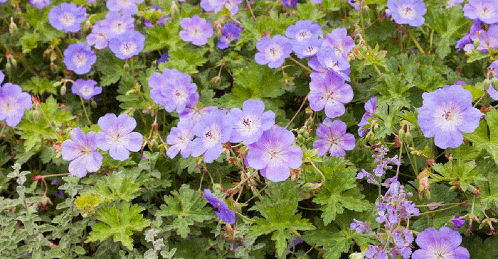 What is the Difference Between Annual vs Perennial Plants?