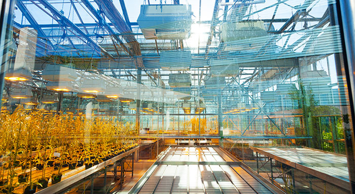 Automating The Greenhouse Environment
