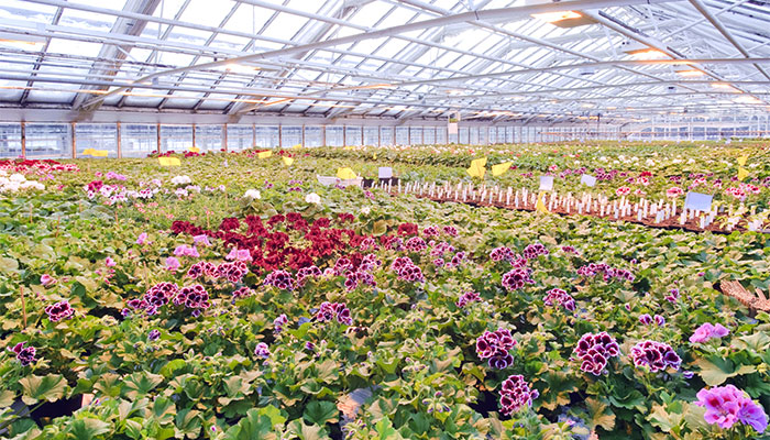 Why You Should Consider Greenhouse Growing