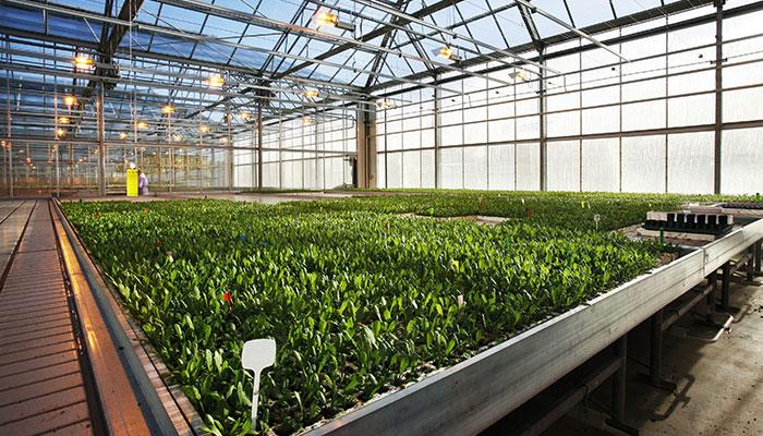 Indoor vs Outdoor vs Greenhouse Flower