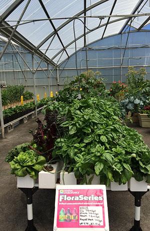 Feeding Your Plants (Fertilizer vs Liquid Nutrients)