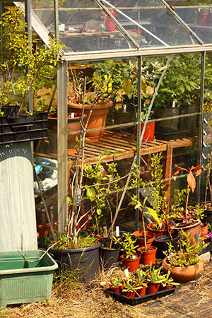 What Is Greenhouse Growing?