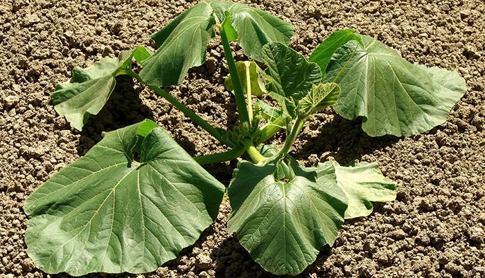 What Is Heat Stress In Plants?