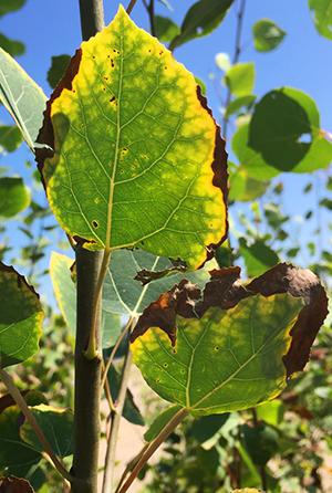 How To Identify Heat Stress In Plants