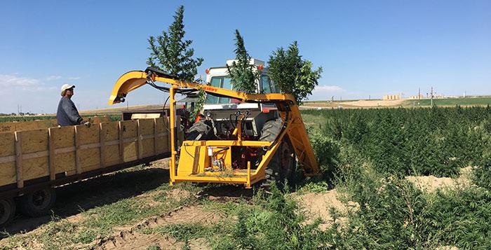Triminator Kirpy CBD Hemp Machine
