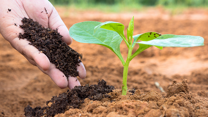 How To Use Worm Castings In Potted Plants & Garden Beds Alike