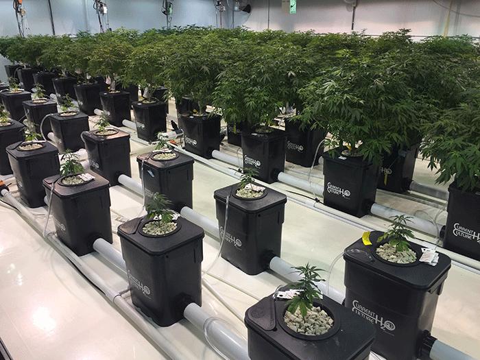 hydroponics growing 101