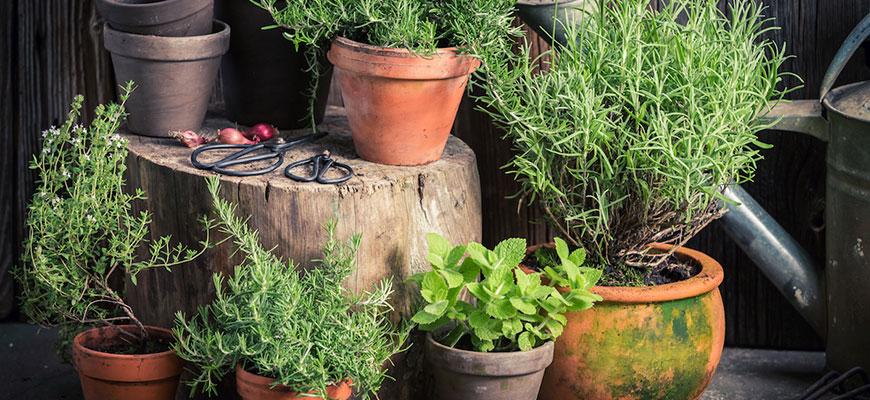 Container Garden Care
