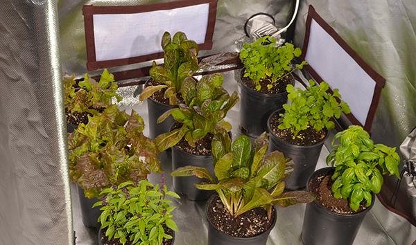 Bring plants indoors