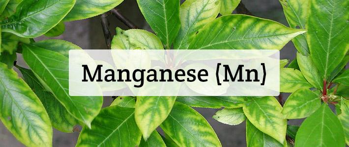 Manganese Mn Nutrient Deficiencies In Plants