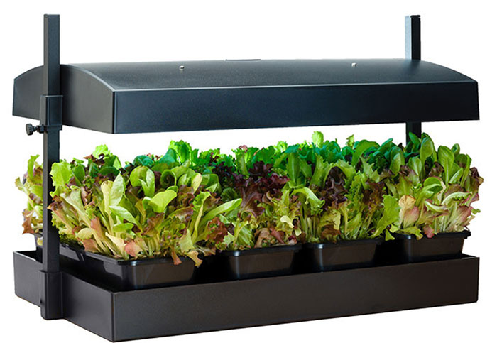 Which Systems Are Best For Growing Microgreens Hydroponically?