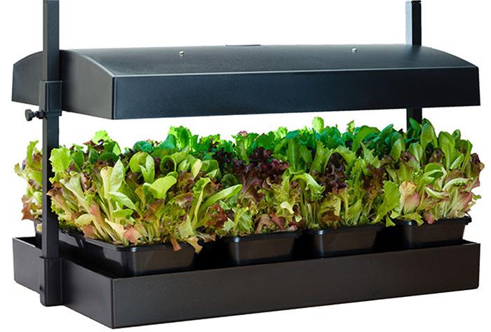 How to start a kitchen herb garden