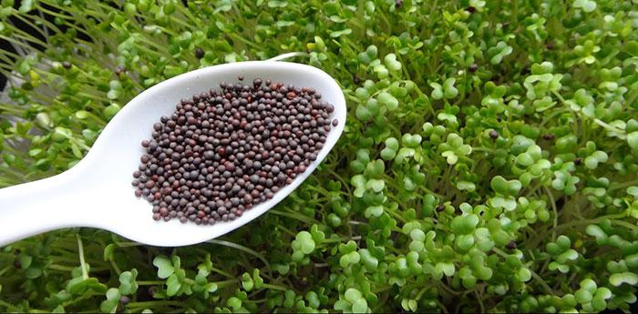 Choosing Seeds vs Cuttings