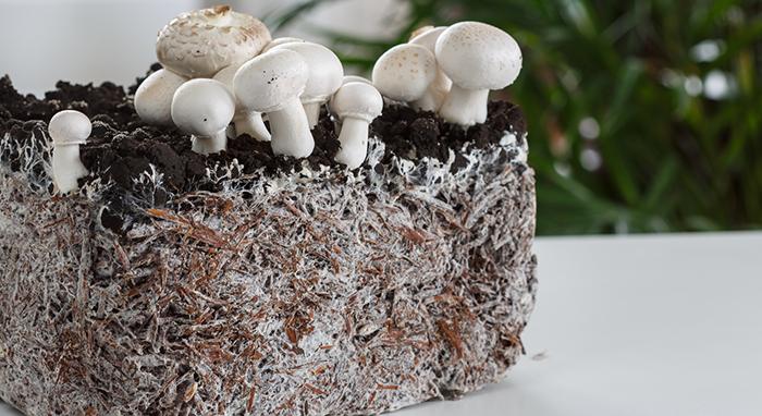 step 2 - Grow Your Mycelium