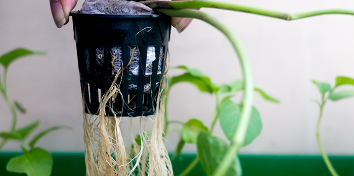 What Plants Can You Use Rooting Hormone On?