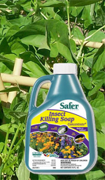 Safer Brand Insect Killing Soap Concentrate