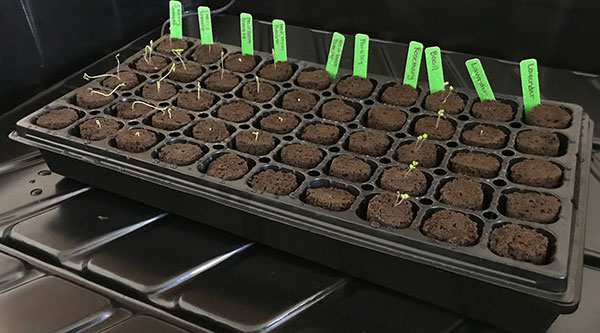 Starting your indoor grow with seeds