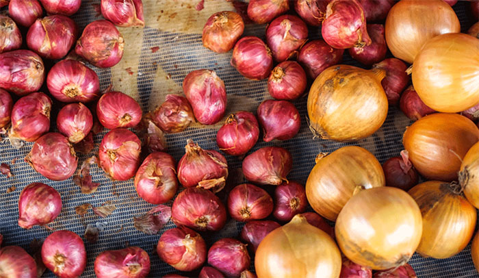 Why Are My Shallots So Small?
