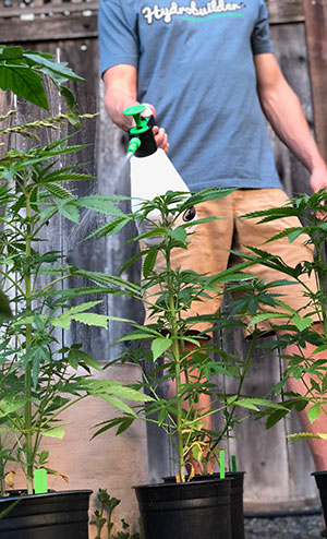 How to use a garden sprayer