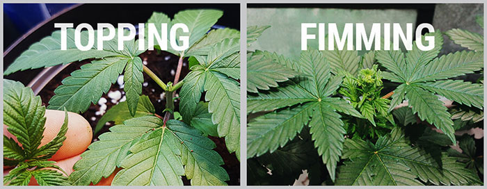 The difference between topping and FIMing