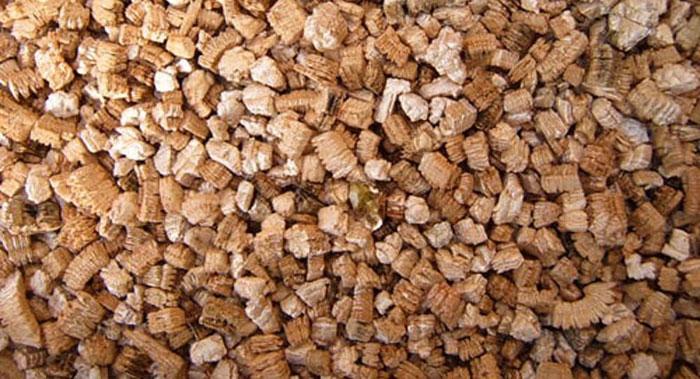 grow hydroponic mushrooms in vermiculite