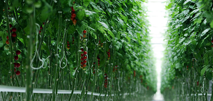 What Can You Grow in a Vertical Farm?