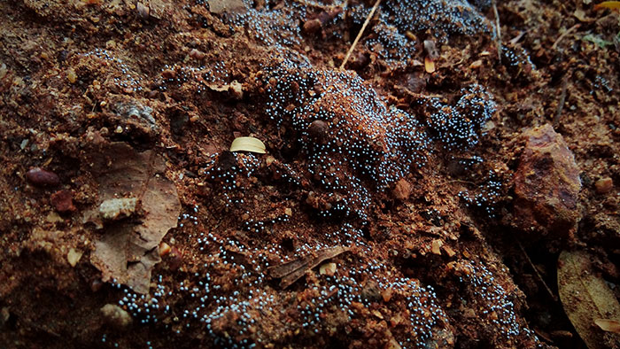 wet soil with poor drainage can often lead to verticillium wilt, or other fungi