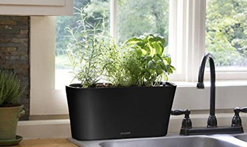 Kitchen herb gardening