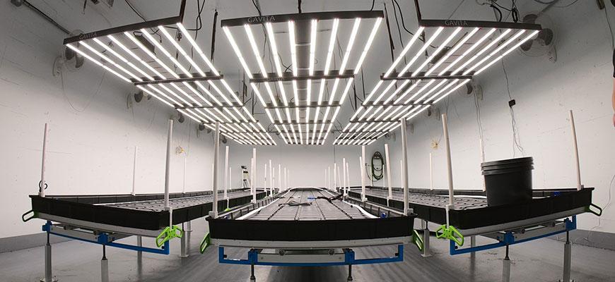 Best LED Grow Lights Of 2021